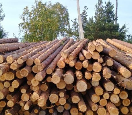 Частным деревообработчикам вновь перекрывают доступ к древесине
